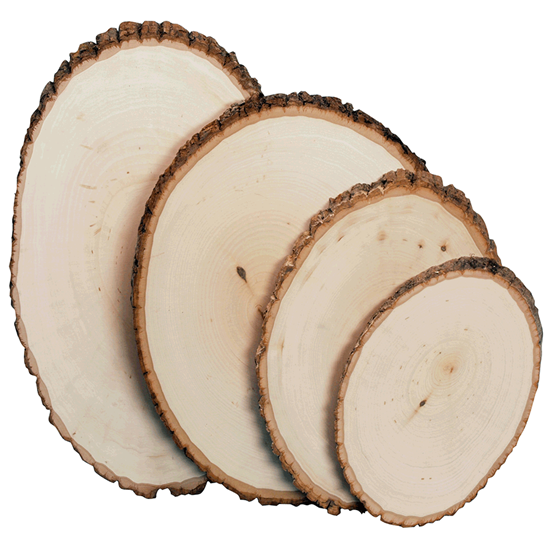 Hobby Craft Wood Slices
